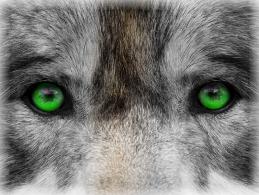 Цветные глаза на черно-белом фоне