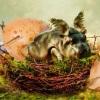 Рождение дракоши