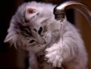 Как нарисовать струю воды из крана