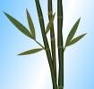 Как нарисовать бамбук в paint.net