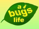 Из жизни жуков