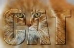 Кошачий текст