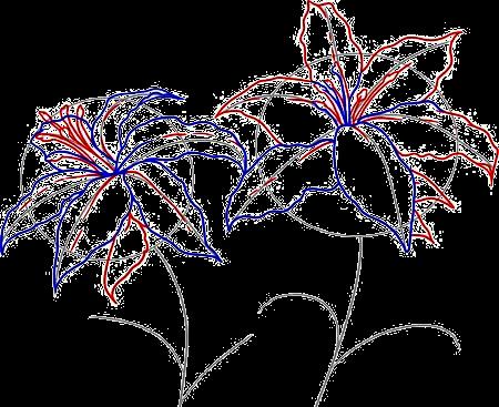 картинки нарисованные карандашом цветы лилии 1